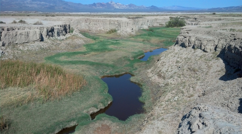 The Amargosa River Defies the Desert