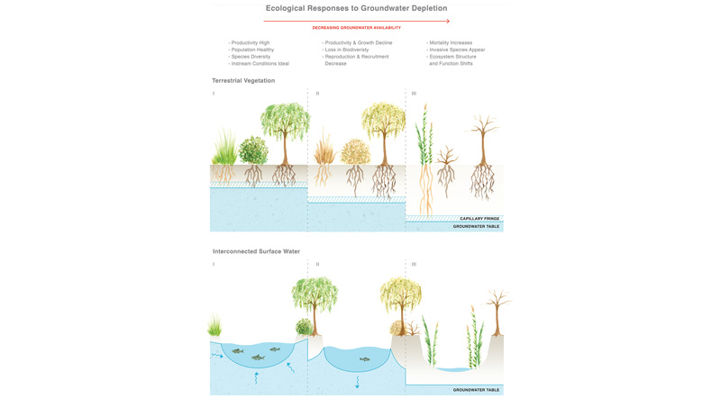 A Global Synthesis of Managing Groundwater Dependent Ecosystems Under Sustainable Groundwater Policy